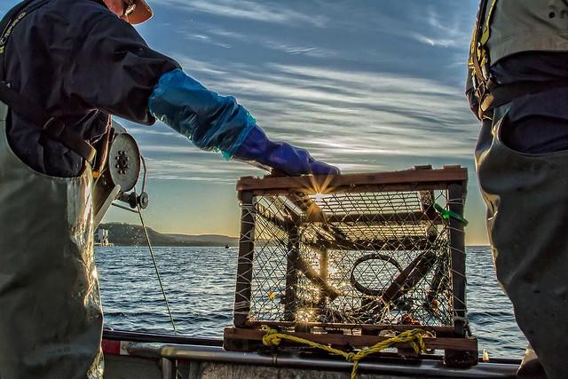 Pêche matinale