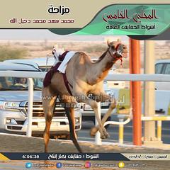 صور أشواط الحقايق العامة بالمحلي الخامس (صباح) ٧-١١-٢٠١٩