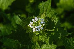 DSC_7112 fresh - nature close-up