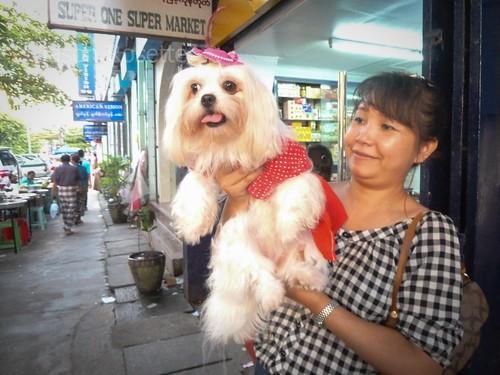 Proud Woman and Her Dainty Dog, Rangoon, Burma (wider)