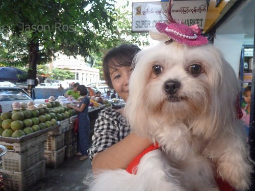 Close up of Dainty Dog held by Proud Woman, Rangoon, Burma