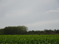 Hamel les marais en2019 (14) - Photo of Biache-Saint-Vaast