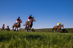 Horses racing towards the finish line