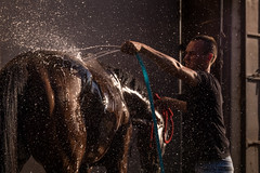 Water droplets flying all over the place as a young man is washing a horse
