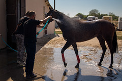Owner washing his horse