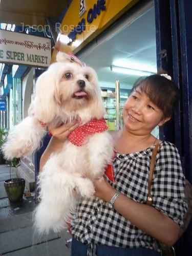 Proud Woman and Her Dainty Dog, Rangoon, Burma