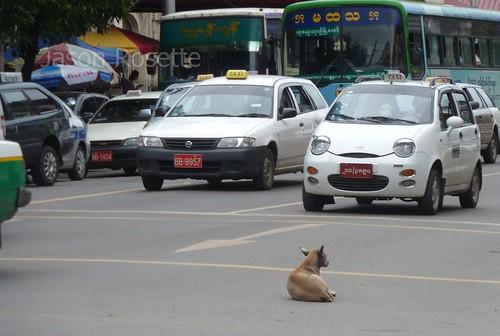 A Dog Relaxes in Mid Traffic, Rangoon, Burma