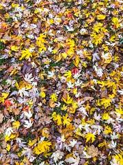 Autumn, Burntwood, England
