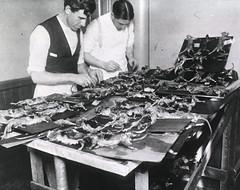 Two men dissecting rats nailed to shingles, San Francisco, Calif.