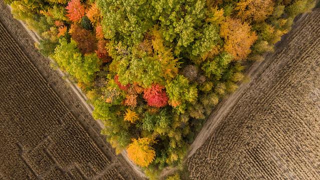 L'automne se pointe
