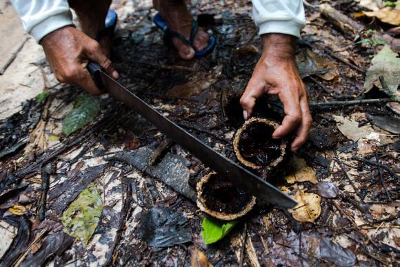 A importância dos povos tradicionais para a preservação da biodiversidade é uma das bandeiras defendidas por especialistas - Créditos: Marcelo Camargo/Agência Brasil