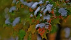 Fall Snow.