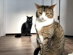 Martha and Amelia #cats