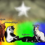 all_the_candidates_who_made_it_to_the_finals_by_cloudymoonthecat