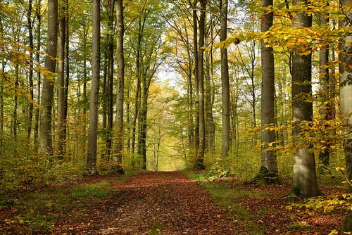 L'automne dans les bois