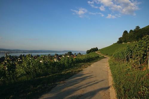 Morat-Murten / Ref.08233