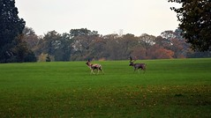 Burghley Park in autumn