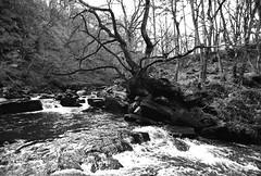 River, near Goathland, 1992
