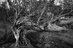 Brimham Rocks 1992
