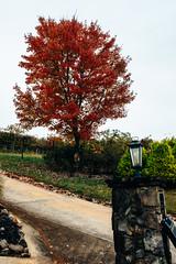 vines-3049
