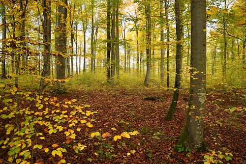 L'automne dans les bois 2