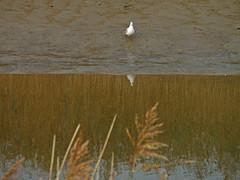 Autumn Evening. Seagull.