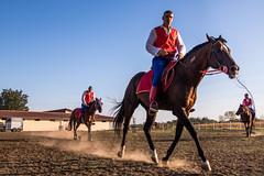 Vitezovi zagrevaju konje za nadmetanje