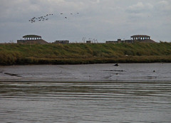 Autumn Evening, Geese, Orford Ness
