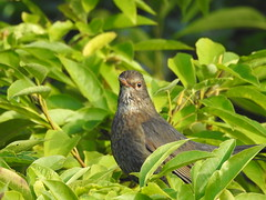 Bird in a bush DSCN3165