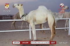 صور منافسات مهرجان قطر الثالث للمجاهيم (أشواط الوضح) مساء  9-11-2019