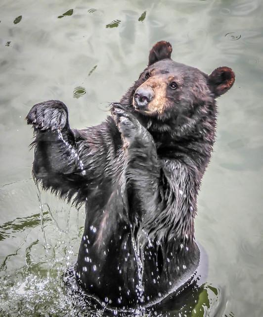 Deviens l'ours en toi