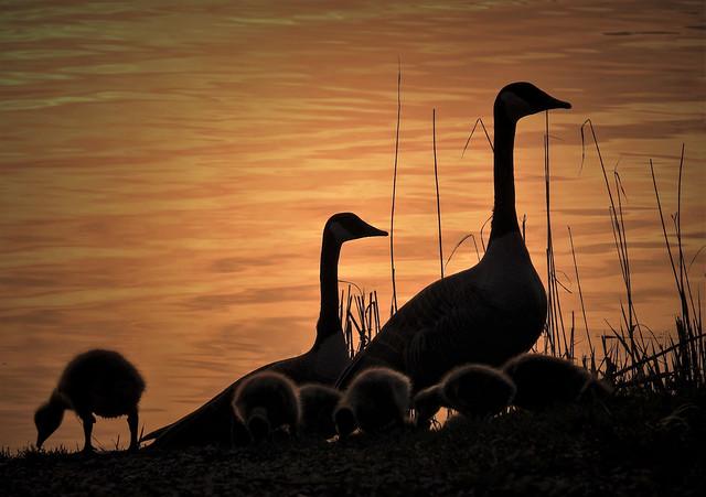 Promenade au soleil couchant