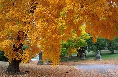 """Cincinnati - Spring Grove Cemetery & Arboretum """"Autumn's Winding Road"""""""