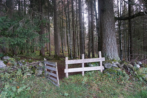 Pfruendwald (Obertoggenburg)