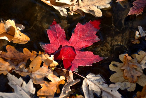 Les feuilles mortes - peinture à l'eau.