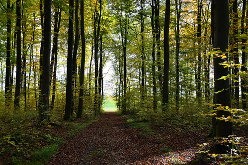 Promenons nous dans les bois...