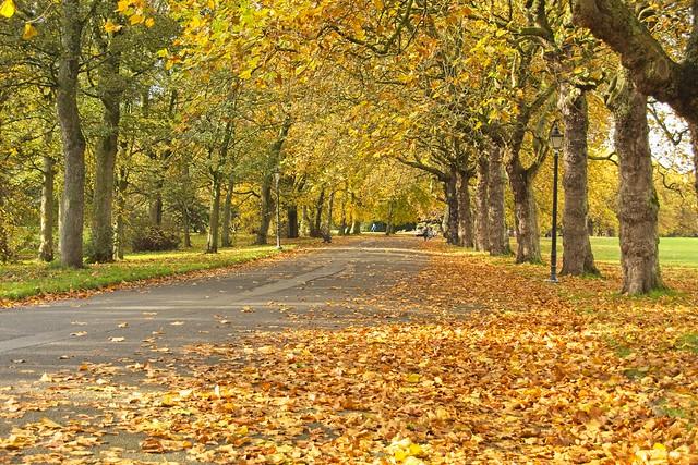 Avenue of Autumn Leaves