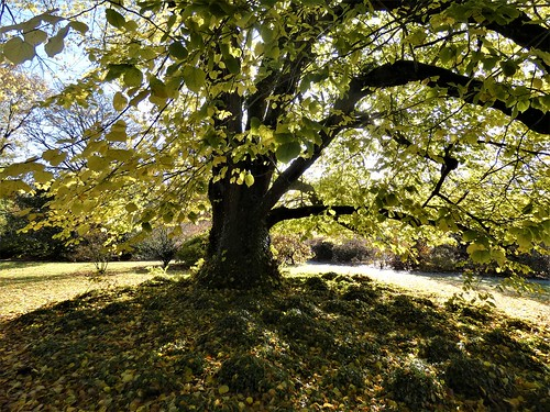 Under the shade of a lime tree on a crisp November morning