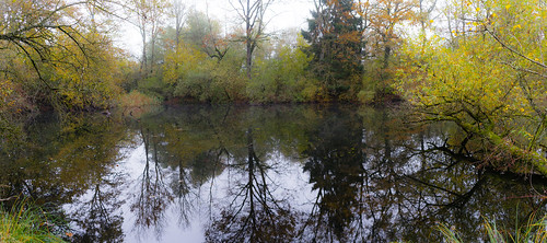 Pano Forest lake