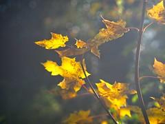 Autumn Bokeh   10. November 2019  Tarbek - Schleswig-Holstein - Germany