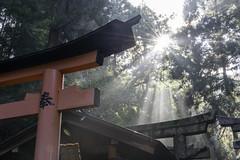 Torii at Fushimi Inari Shrine (伏見稲荷大社) in Kyoto, Japan
