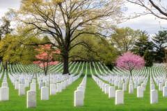 Veterans All