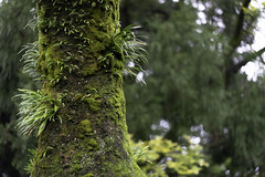 Moss and plants on a tree at Fushimi Inari Shrine (伏見稲荷大社) in Kyoto, Japan