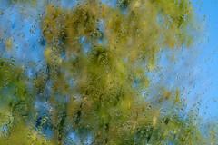 Soleil et pluie pour cet arbre