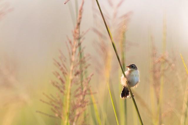 Lovely bird at sunrise