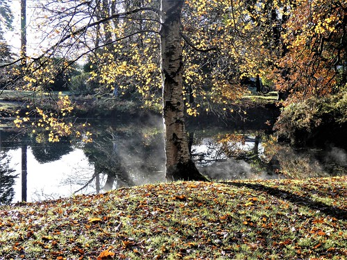 Autumnal beauty: birch, beech, leaf fall and water