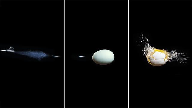 La mort de l'œuf