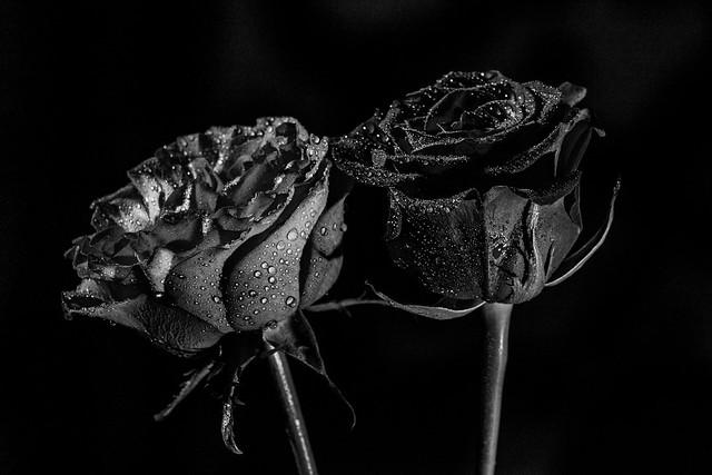 Noir et rose