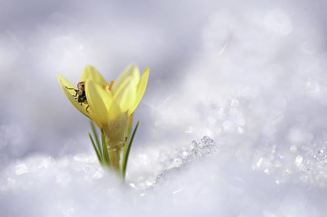Prémices de printemps
