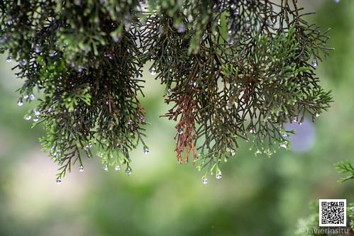 Lluvia en Cabalango